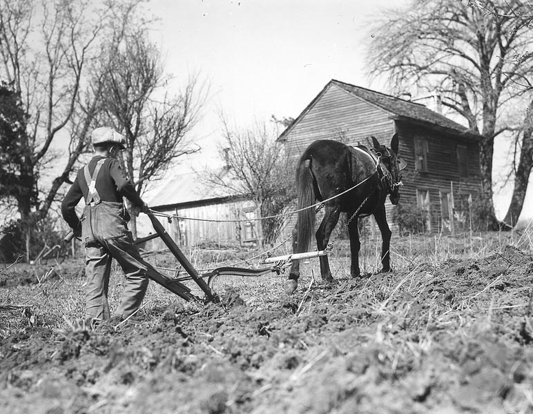 Boy Plowing The Field