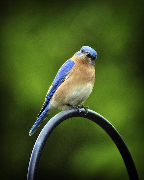 Bird_1280176819