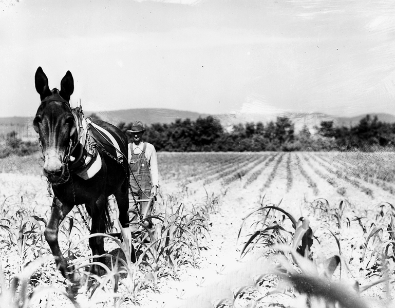 Man Plowing Field With Horse